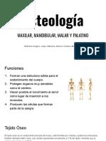 Osteología Maxilar, Mandibular, Malar y Palatino - JGMM