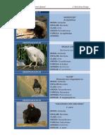 taxonomiaaaa zoológico
