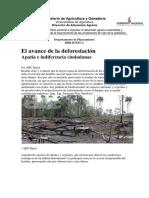 El Avance de La Forestación