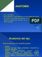 1. Anatomia Conf 1