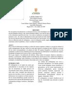 Informe Colenquima