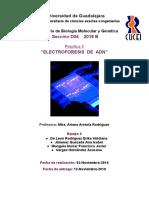 Electroforesis de ADN