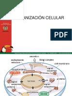 Presentacion Trans Celular