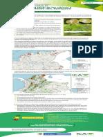 alerta8el HLB DE LOS CITRICOS.pdf