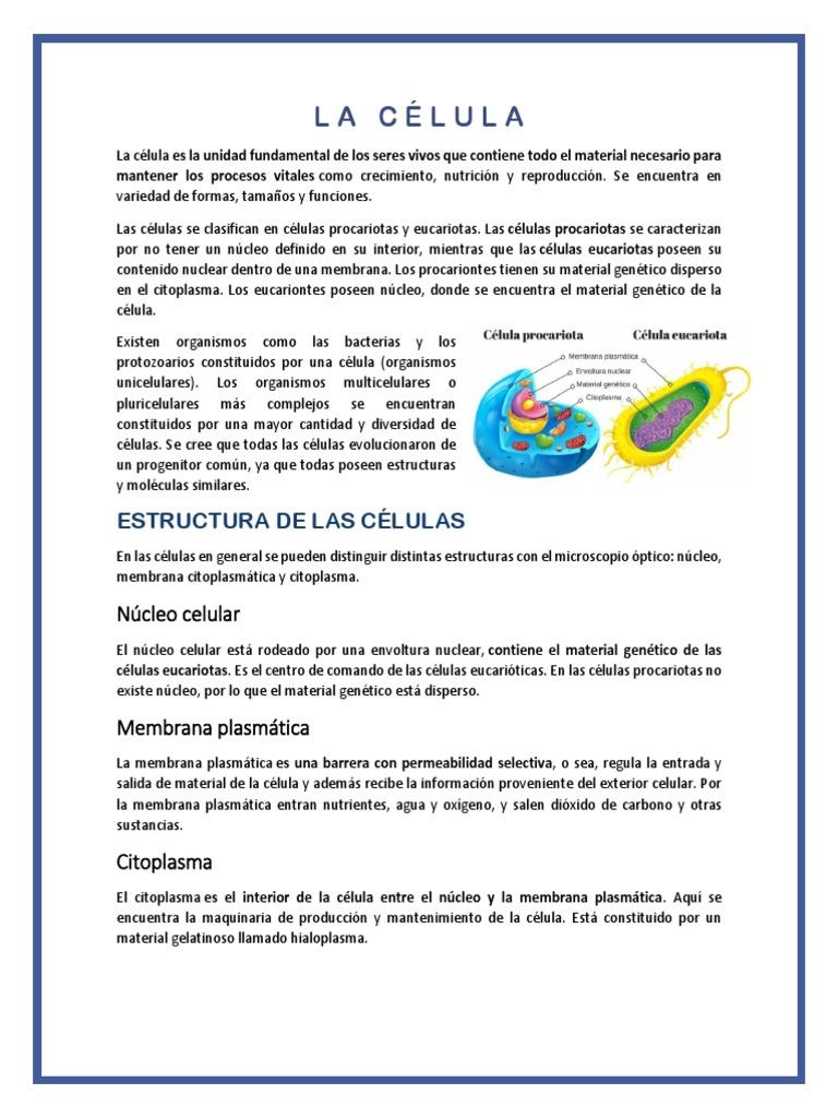 5555 Citoplasma Célula Biología