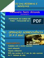 Manejo Das Bezerras