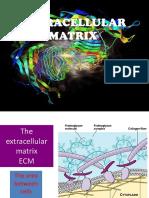 matrix extracelullar