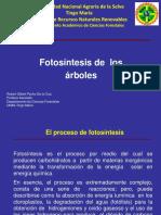 01 Fotosíntesis de árboles.pptx