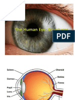 The Human Eye PowerPoint.pptx