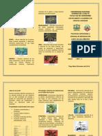 Funciones y Deficiencia Nutricional de La Yuca