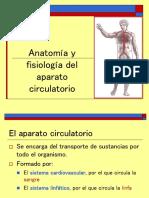 Sistema Circulatorio Ivonne