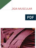 17. Fisiologia Muscular