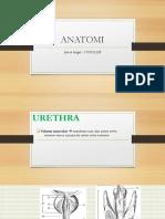 Anat Histo