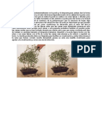 Anon - El Arte Del Bonsai