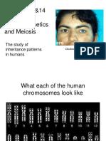 Humangenetics Meiosis.ppt