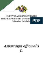 ESPARRAGO(HISTORIA, ESTADISTICAS, MORFOLOGIA, FISIOLOGIA Y VARIEDADES)1110.ppt