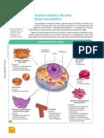 Estrutura básica de uma célula animal
