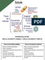 Celulas Ejemplos.ppt