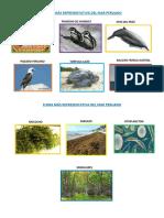 Fauna Más Representativa Del Mar Peruano