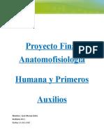 anatomologia humana