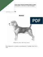 Beagle _ FCI.pdf