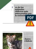 10 animales chilenos en peligro de extinción