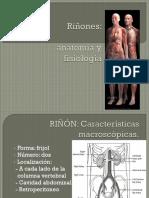 Anatomía y fisio renal