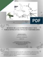 Presentación1 anatomia.pptx
