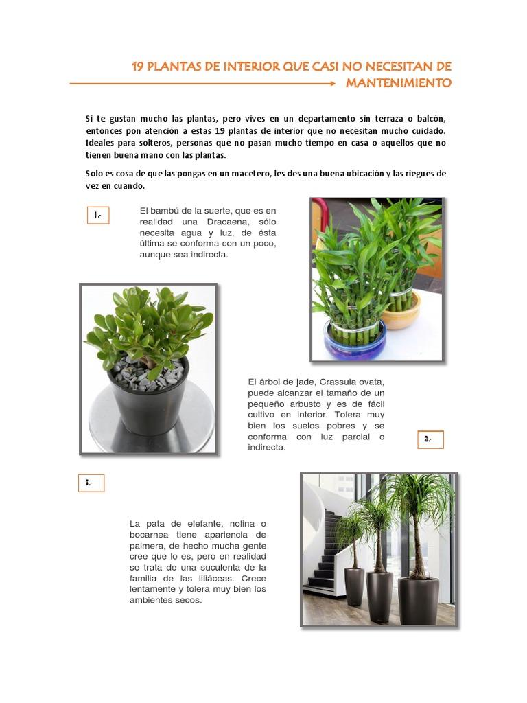 Plantas Para Interiores Planta De Interior Agricultura