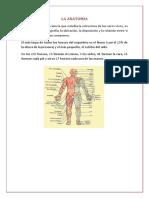 La Anatomía