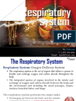 Therespiratorysystem 130524022043 Phpapp01 Test