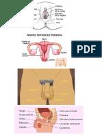 Funciones y Características Del Aparato Reproductor Femenino Externo