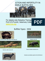Lecture 19 Reroduction and Infertility in Female Buffaloes