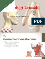 Myologi Trunch 4 1