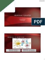 neurona y sinapsis.pdf