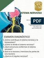 Sistema Nervioso 5