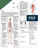 el sistema esqueletico y sus funciones.docx