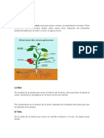 PLANTS AND PARTS.docx
