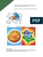 cuestionario ciencias rafa.docx
