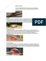 Animales en Exitincion