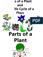Science - Life Cycle of a Plant