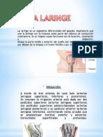 Inervacion de La Laringe