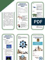 Triptico Caracteristicas Microscopicas y Macroscopicos de Los Animales