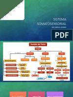 Sistemas sensoriales 2