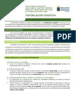 5.- Fosforilación Oxidativa.docx
