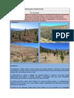 01 - Forestación y reforestación.pdf