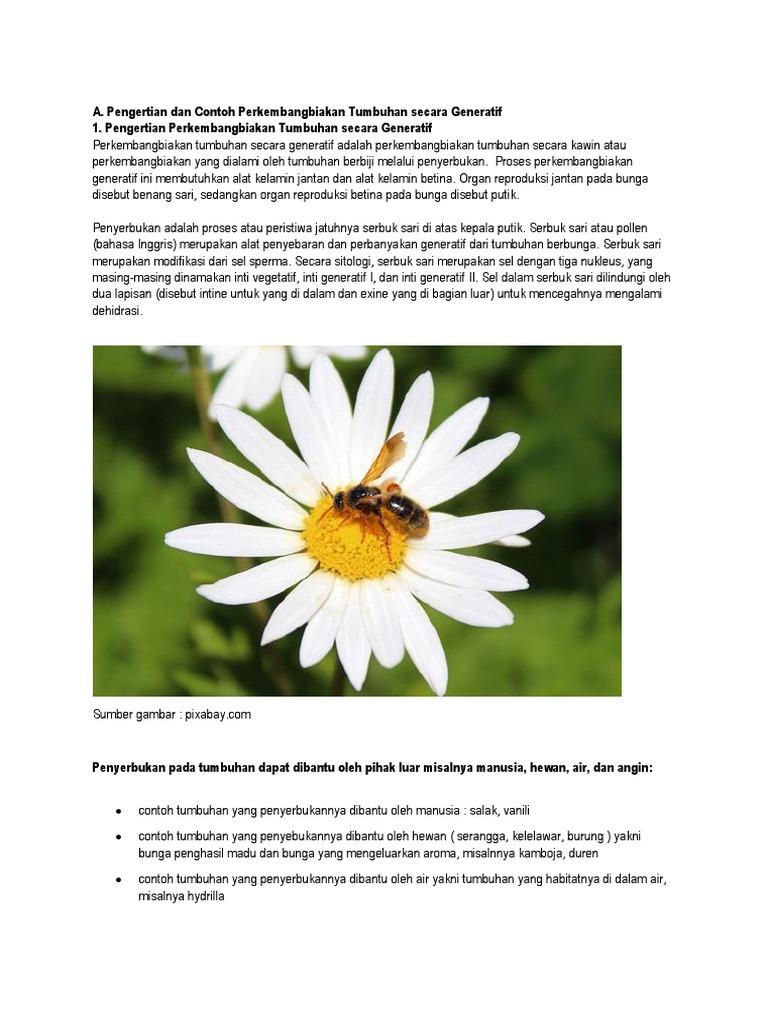 Gambar Perkembangbiakan Tumbuhan Generatif Gambar Gambar