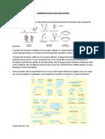 Morphologie Des Bacteries