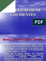 Odontogénesis-amelogenesis