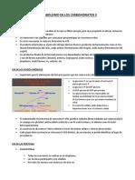 Clase 06 - Metabolismo de Los Carbohidratos II